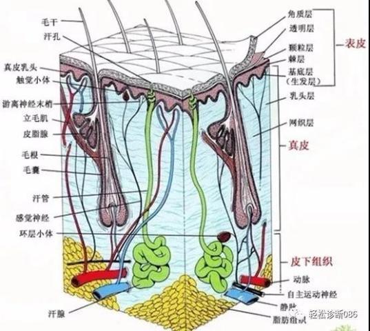 皮肤淋巴瘤(1)——概述