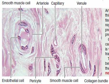 血管周细胞肿瘤概述