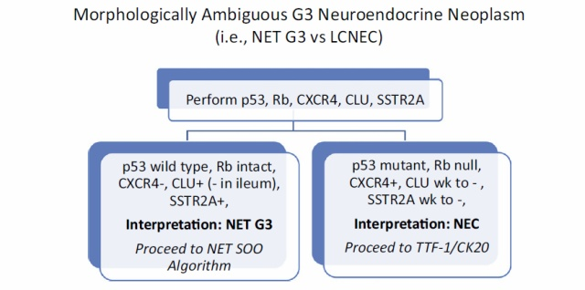 神经内分泌肿瘤诊断和分类的更新,我们需要知道哪些?