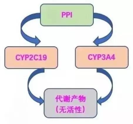 幽门螺杆菌(HP)根除方案及注意事项(最新版)