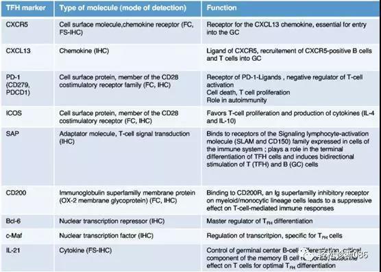 滤泡辅助T细胞(TFH)及其相关淋巴瘤(3)