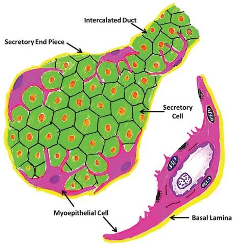 """""""肌上皮细胞""""做客临床病理新闻台《病理基础知识》栏目"""