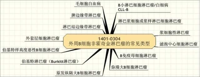 1401-0304 外周B细胞非霍奇金淋巴瘤的常见类型.学习