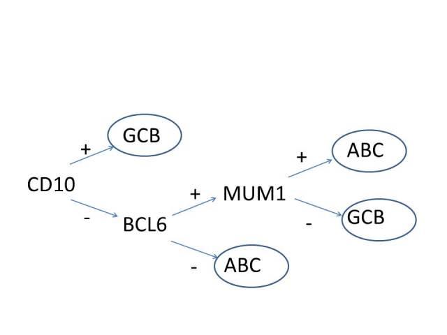 CAP文献学习-弥漫大细胞表现的B细胞淋巴瘤诊断策略(三)